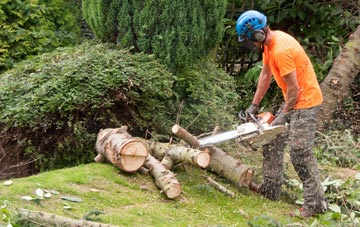 additional services offered by Marlow tree surgeons