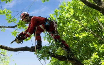 find trusted rated Marlow tree surgeons