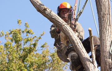 finding qualified Marlow tree surgeons