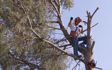 reasons to consider Marlow tree surgery