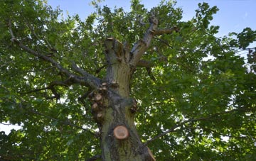 what is Marlow tree surgery?