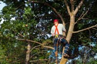 Marlow tree crown reduction services