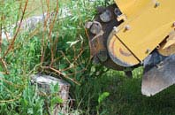 free Marlow tree stump grinding quotes