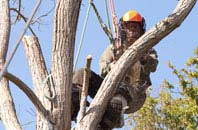 Marlow tree surgeon services