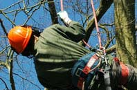 free Marlow tree surgeon quotes