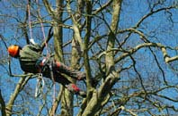 Marlow tree surgery services