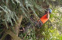 free Marlow tree surgery quotes